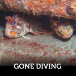Gone Diving Finding Fishes With My Anchor Dive Light